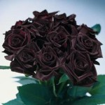Black Bacarra Red Rose Bouquet